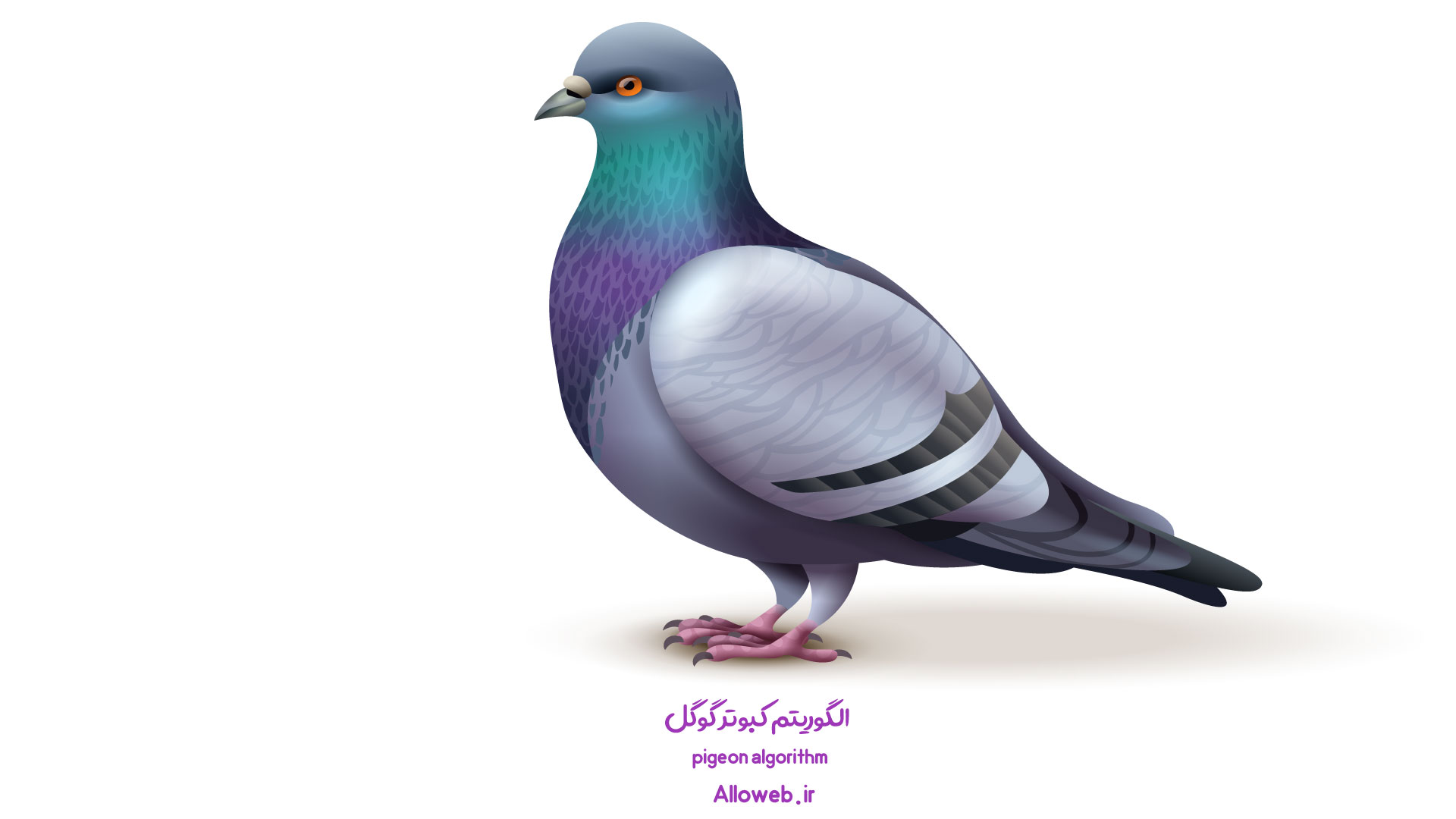 pigeon-algorithm-الگوریتم-کبوتر گوگل